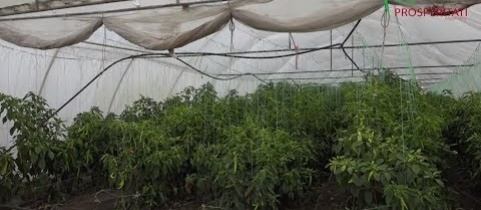 Embedded thumbnail for Konyhakerti növények termesztése, Lukácsfalva (videó)