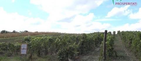 Embedded thumbnail for Többéves ültetvények, beruházás megvalósítása – Zenta (videó)