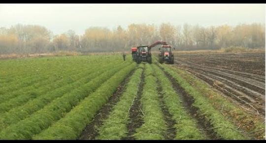 Embedded thumbnail for Mezőgazdasági támogatások