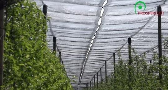 Embedded thumbnail for Mezőgazdasági fejlesztések, Kupuszina (1) videó